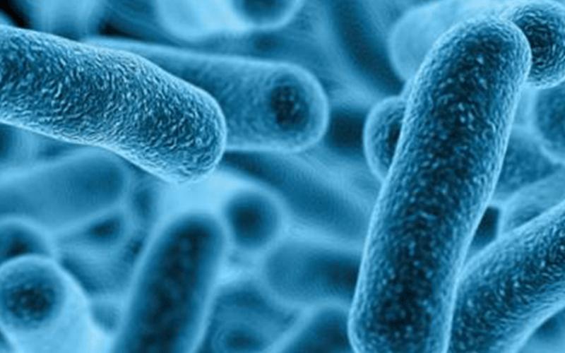 Legionella | Bluewire Hub Ltd